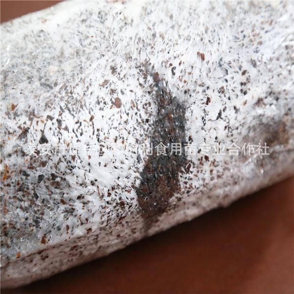 食用菌菌种